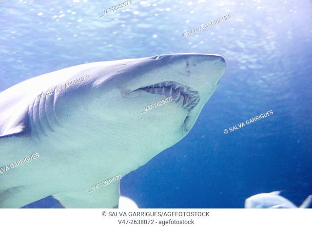 underwater photography of the mouth of a shark
