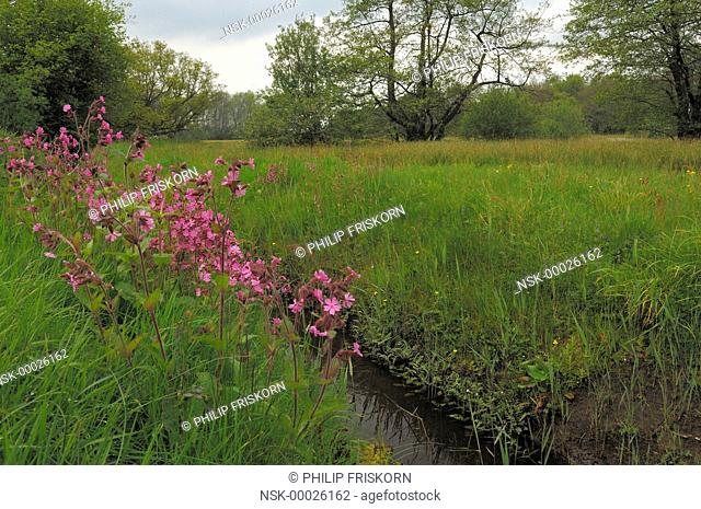 Landscape at Elsbroek with view on the valley with Red Campion (Melandrium rubrum), The Netherlands, Drenthe, National Parc Drentsche Aa