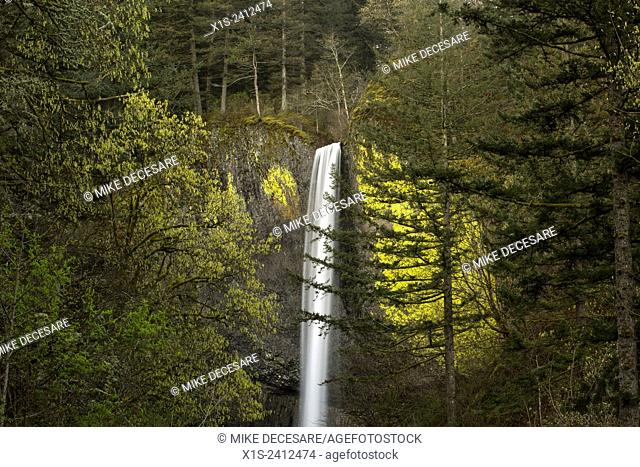 Latourell Falls in the Columbia River Gorge is the first waterfall reached when coming from Portland