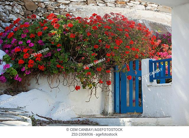 House door covered with colorful geranium flowers near the town center Chora, Ios, Cyclades Islands, Greek Islands, Greece, Europe