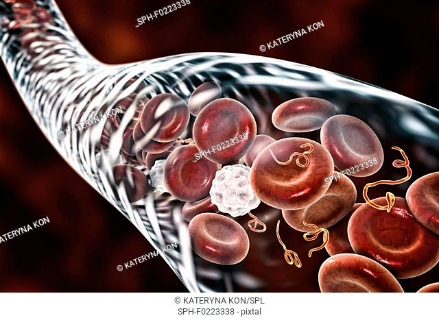 Ebola virus particles in blood, illustration