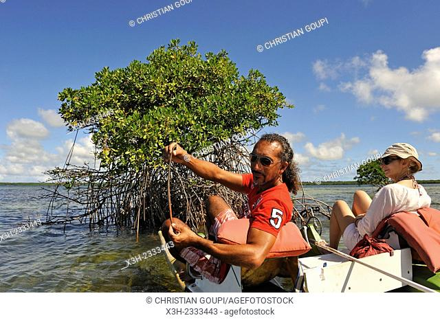 guide explaining the reproduction of rhizophora during a pedalboat trip around the mangrove swamp, Grand Cul-de-sac Marin, Vieux-Bourg, Morne-a-l'eau
