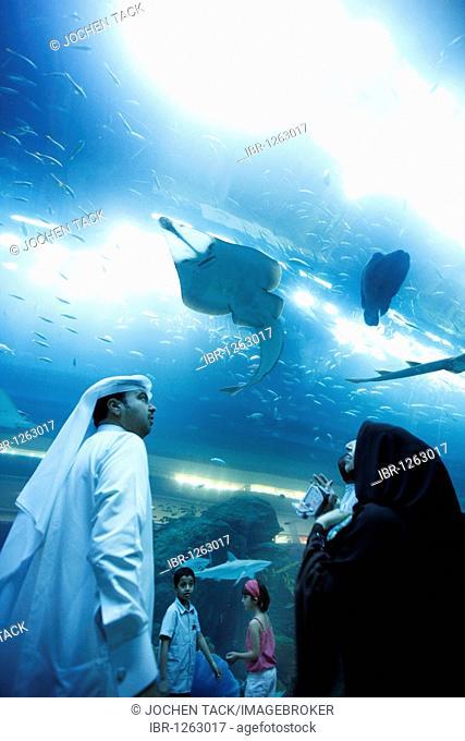 Dubai Aquarium and Underwater Zoo at the Dubai Mall, Dubai, United Arab Emirates, Middle East