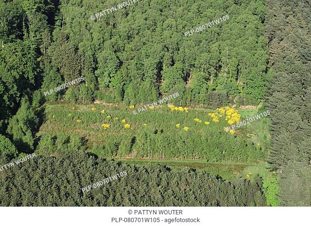 Forests and grassland with Link broom Cytisus scoparius from the air, Belgium