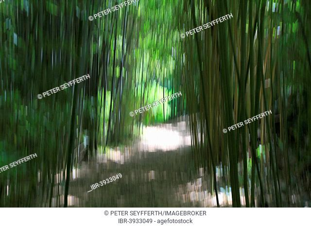Painting with light, path in the Les Bambous du Mandarin bamboo forest, Département Var, Provence-Alpes-Côte d'Azur, France