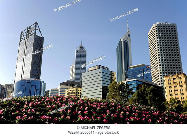 Australia, Perth, central business district, pink flowers in front of skyscrapers