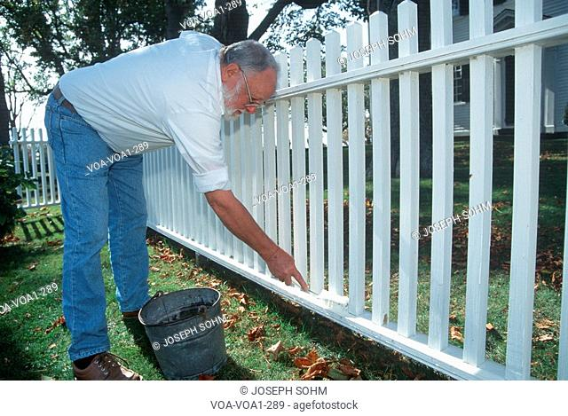 Retired man painting white picket fence, Little Compton, Rhode Island