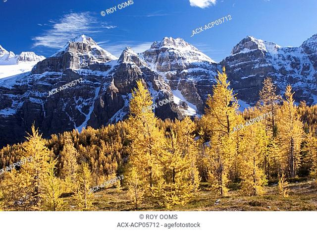 larch trees and mountains near Moraine Lake, Alberta, Canada