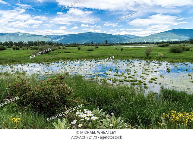 Creston Valley wetlands, near Creston, British Columbia, Canada