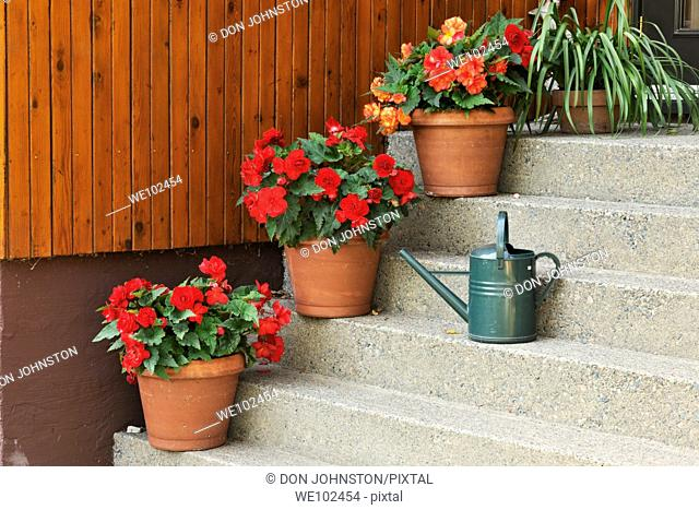 Staircase with potted begonias and watering can
