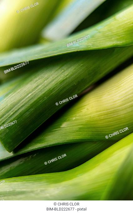 Stalks of green vegetable