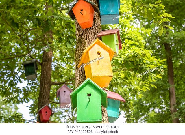 Manmade colorful nests hang on tree. Handmade wooden birdhouse on a tree for bird protection. Spring scenery with bird nesting box on a tree