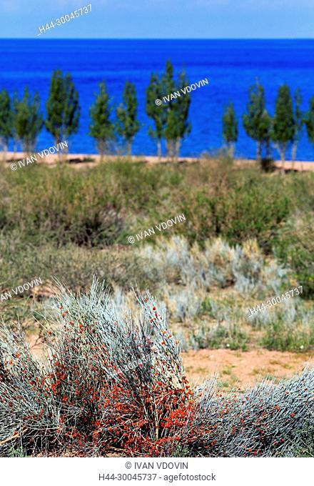 Issyk Kul Lake shore, Issyk Kul oblast, Kyrgyzstan