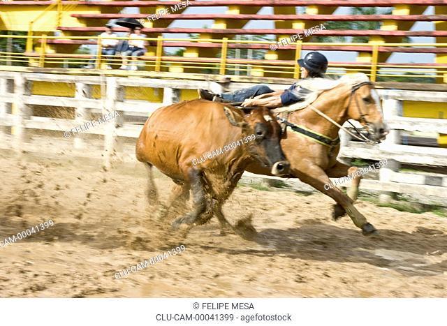 Cole Bull, Llanos Orientales, Villavicencio, Meta, Colombia