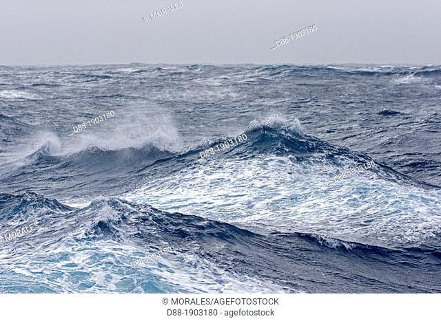 Antarctic, Ocean between Falklands Islands and South Georgia, South Georgia, Waves