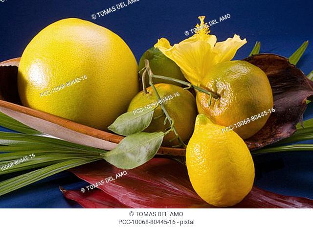 Studio shot of a variety of citrus fruit