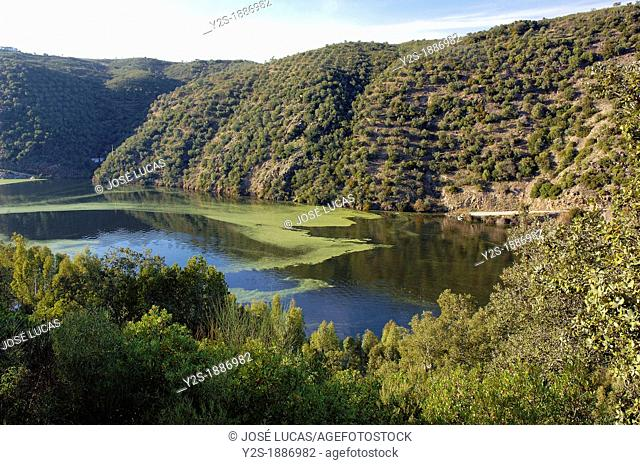 International Tajo Natural Park, Caceres-province, Spain