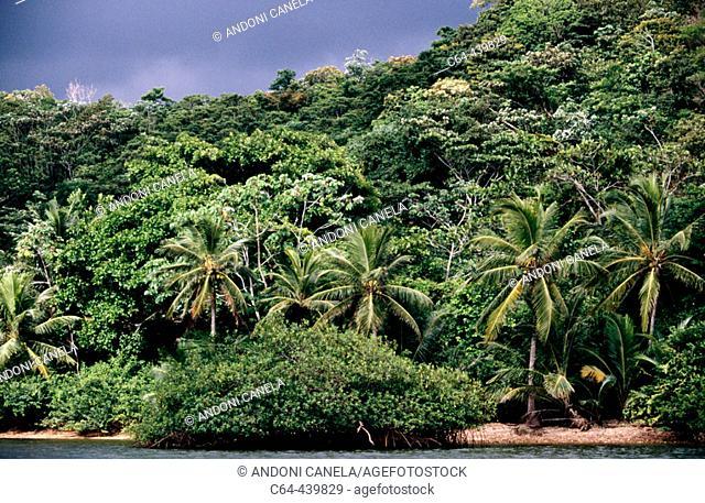 Mangrooves, rainforest and palm tress. Kuna Yala. San Blas region. Caribbean sea, Panama