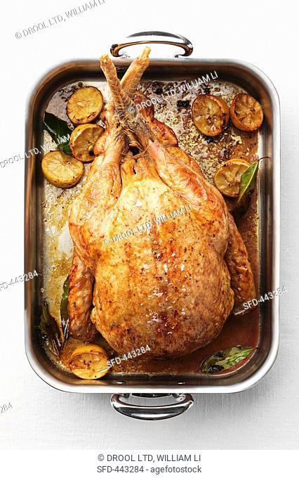 Roast turkey with lemon in roasting tin overhead view