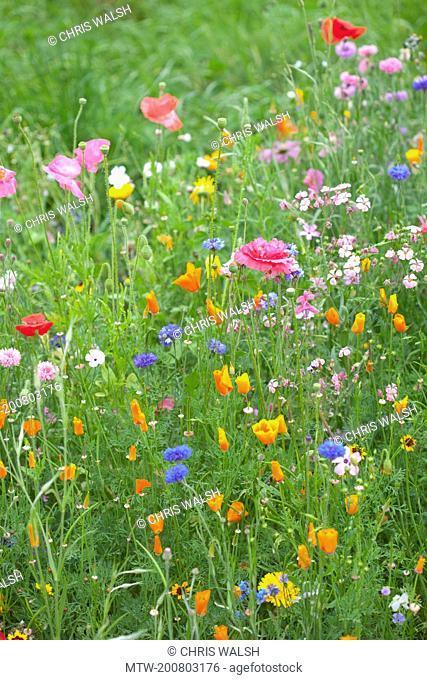 Wild flowers colourful grass meadow field summer