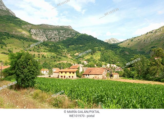 Corn field and view of the village. Mier, Asturias province, Spain