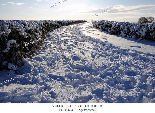 An impassable country lane after a heavy snowfall  Cotswolds, Oxfordshire