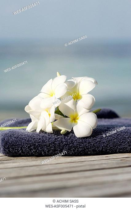 Thailand, Koh Phangan, Frangipani flowers on jetty