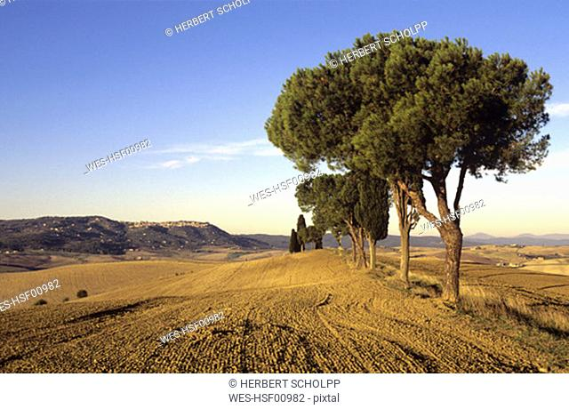 Italy, Tuscany, View of ploughed field