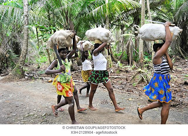 young women carrying sack of coconuts on their head, around Porto Alegre, Sao Tome Island, Republic of Sao Tome and Principe, Africa
