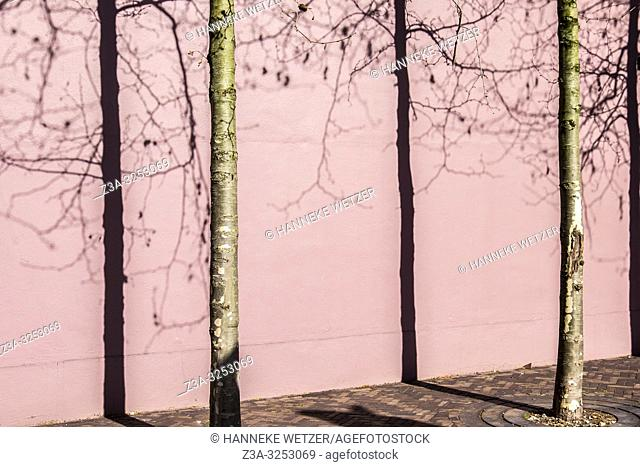Pink wall with trees and shadows in Eindhoven, The Netherlands, Europe