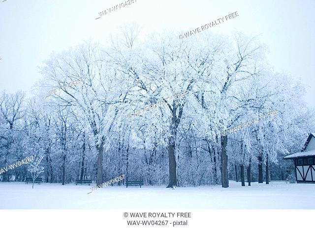 Park in winter, Assiniboine Park, Winnipeg, Canada