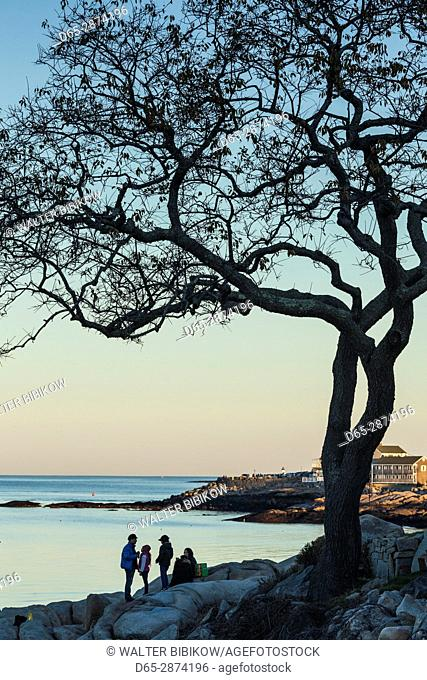 USA, Massachusetts, Cape Ann, Rockport, tree over Front Beach, dusk