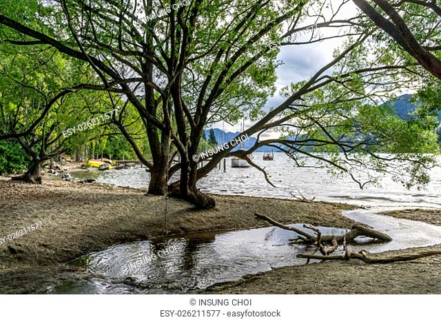 lake wakatipu view of willow tree from queenstown lakeside beach area. Queenstown is a small town in new zealand. Taken during summer