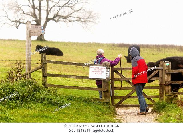 walkers passing through gate with Aberdeen Angus Cattle by footpath with 'keep your dog on a lead' sign