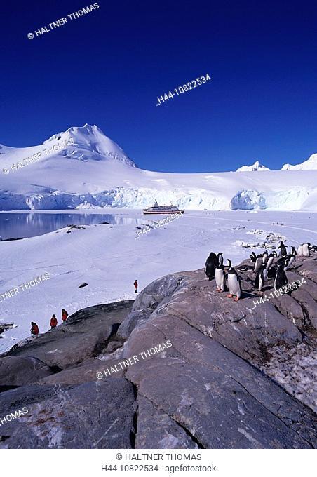 Antarctic, Antarctic, Antarctic Ocean, cruise, port Lockroy, British research station with museum, ship M Explorer, to
