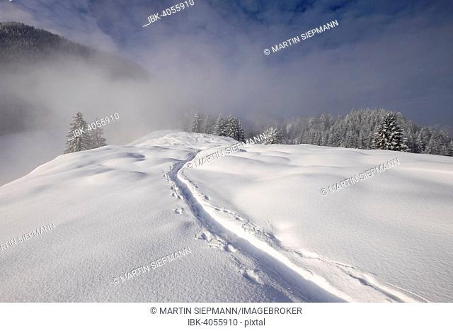 Tracks in the snow, Mt Hocheck, Mangfall Mountains, near Oberaudorf, Upper Bavaria, Bavaria, Germany