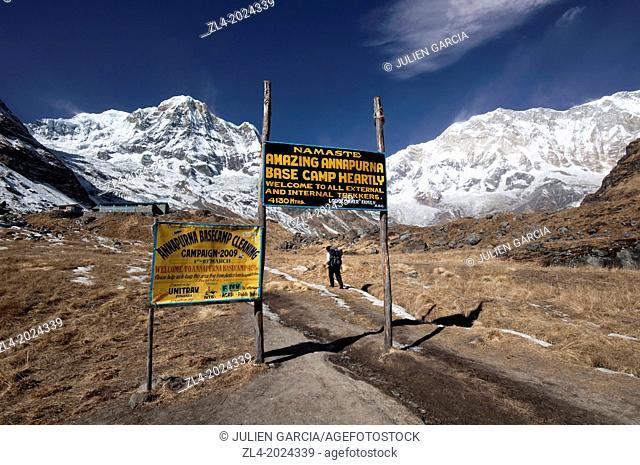 Nepali trekker reaching the Annapurna Base Camp at 4130m altitude. Nepal, Gandaki, Annapurna, Annapurna Base Camp