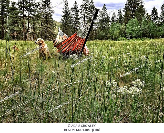 Dog sitting by hammock in rural landscape