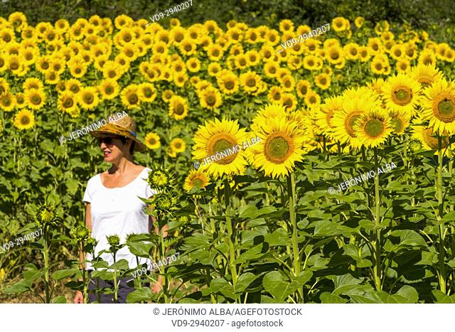 Woman with hat in a sunflowers field in summer. Las Merindades County Burgos, Castile and Leon, Spain, Europe