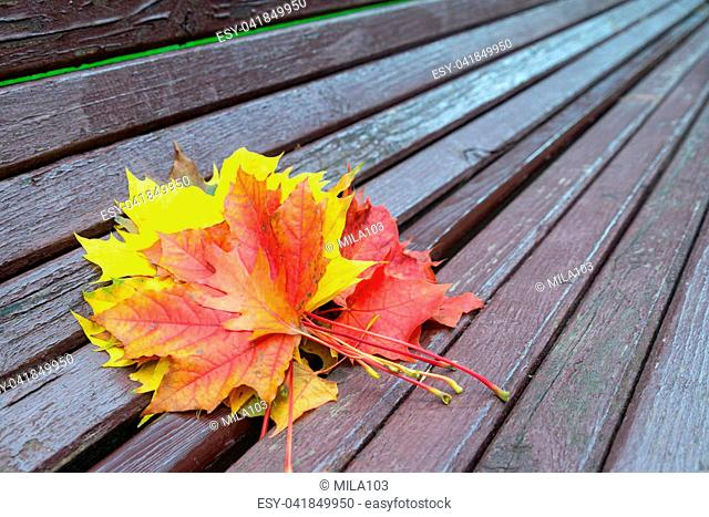 Bench with fallen maple leaves in autumn Park
