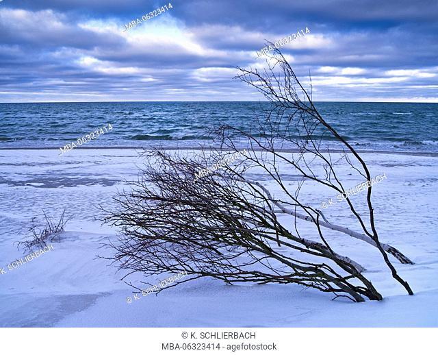 Germany, Mecklenburg-Western Pomerania, Western Pomerania Lagoon Area National Park, winter day on the West beach of Darss