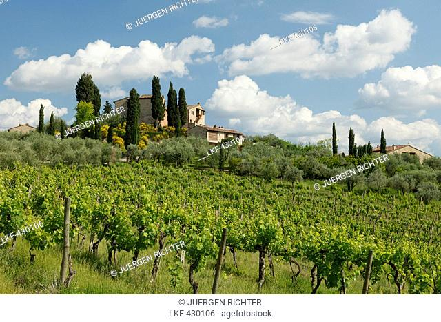 Vineyard and country manor near San Gimignano, province of Siena, Tuscany, Italy, Europe