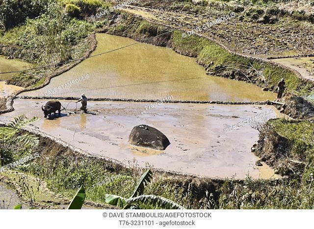 Rice farming in Fidelisan village, Sagada, Mountain Province, Philippines