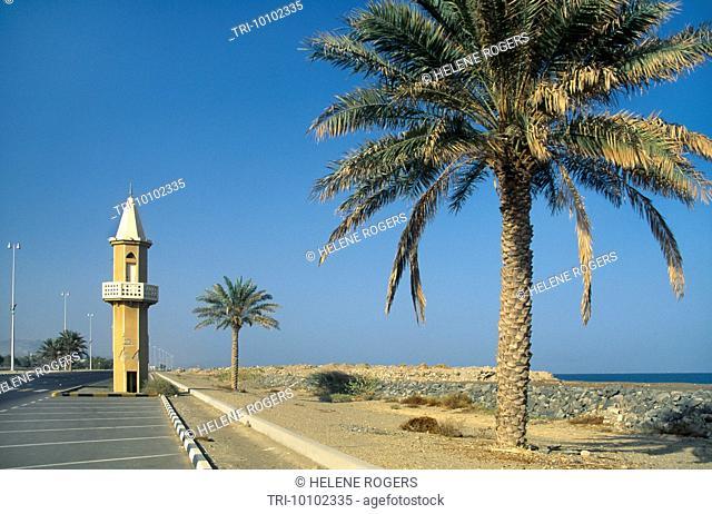 Fujairah UAE Minaret And Palm Tree