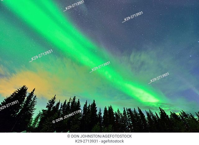 Aurora borealis (Northern Lights) over spruces near Great Slave Lake , Hay River, Northwest Territories, Canada
