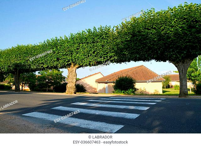 Crosswalk and trees in France