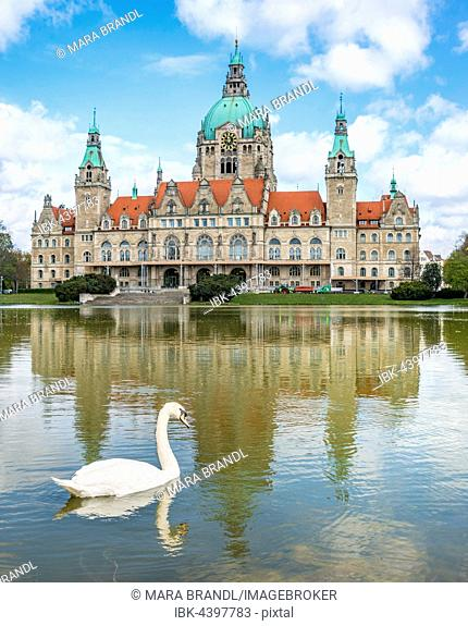 New Town Hall, swan, Maschteich Pond, water reflection, Maschpark, Hanover, Lower Saxony, Germany