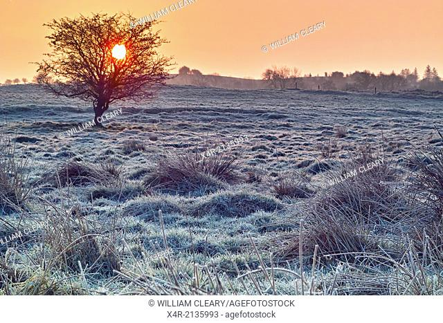 Sunrise on a frosty morning, near Loughnavalley, County Westmeath, Ireland