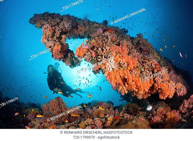 Scuba Diving on Coral Reef, North Male Atoll, Indian Ocean, Maldives