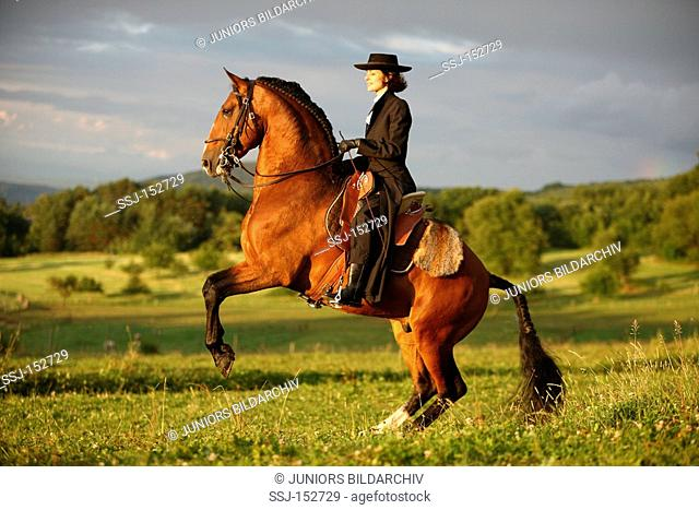 woman on Lusitano horse - rearing